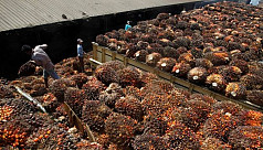 India's February palm oil imports ease...