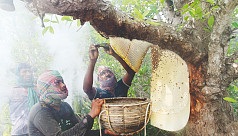 Local and foreign brands race to grab large honey market