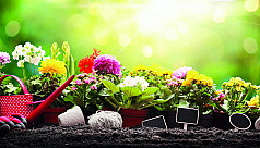 Indoor gardening made easy