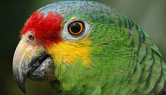 Police seize lookout parrot trained...