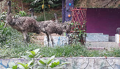 Chittagong Zoo gets ostriches,