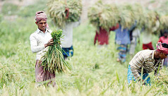 LDA urges govt to buy paddy directly...