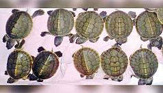 10 rare baby turtles born in the...