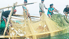 Rajshahi fish farmers trying hard to recover losses incurred due to Covid-19 pandemic