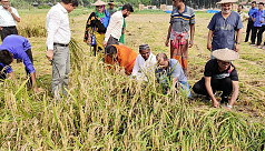 Chuadanga DC helps farmers to harvest...