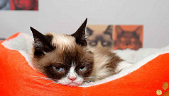 Internet star Grumpy Cat dies at age...