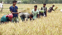 Prof Barkat for fixing paddy price at...