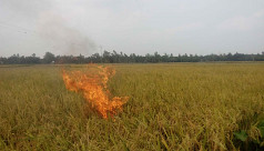 Farmer sets own paddy field on fire in protest
