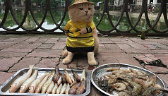 Cat named 'Dog' is Vietnam's most beloved fish vendor