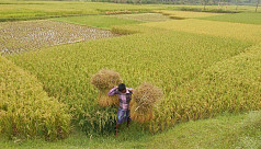 Agriculture Minister: 90% Boro paddy...