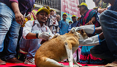Stray dogs need vaccination, not relocation