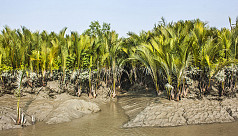 Protecting the Sundarbans