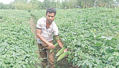 Vegetable farming helps a farmer win...
