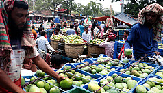 Mangoes start arriving in Rajshahi markets