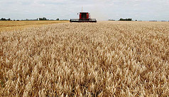 FAO: World food prices rise in May, cereal output forecast falls
