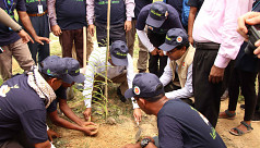 Reforestation activities launched in...