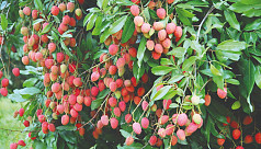 Reasonable prices of lychees, mangoes,...