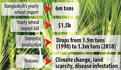 Wheat demand growing fast in Bangladesh