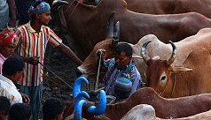 Putting a stop to unethical cow-fattening practices