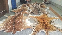 Wildlife trafficking continue to rise