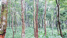 Vibrant herbal garden of Madhupur forest...