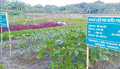 Vegetable farming on Bagerhat floating...