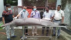 Dolphin found dead in Mongla River