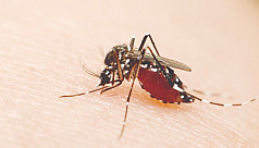Story of the Aedes mosquito