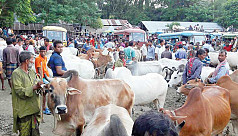 Quader: Cattle markets may hike Covid-19 transmission