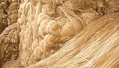 Jute production falls due to low price,...