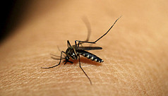 Is dengue the new normal?