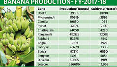 Banana farming expands on low production cost, high profit