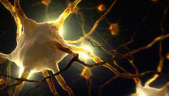 Scientists discover new pain-sensing...