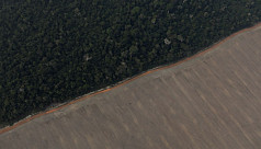 Amazon deforestation accelerates by...