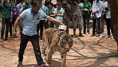 Dozens of tigers dead after confiscation...