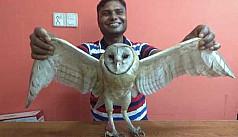 Endangered barn owl rescued in Thakurgaon