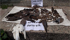 Man fined for poisoning over hundred birds to death in Lalmonirhat