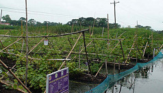 Floating farming thriving in...