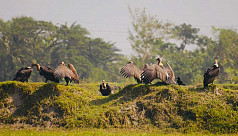 Vulture protection: Cabinet clears proposal...