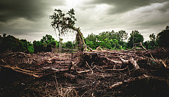 Losing our forests