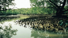 TIB: Save Sundarbans, save Bangladesh