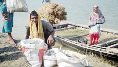 Ilish netting continues despite ban