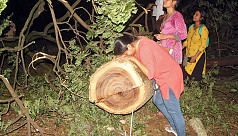 Indian Supreme Court halts tree felling...