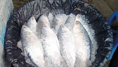 Ilish with roe flood Chandpur, Khulna fish-markets