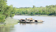 Sundarbans: The physical buffer that needs a rest