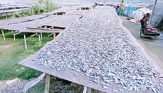 Dry fish trade booms in Natore