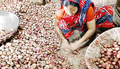 Newly harvested Murikata onion hits market