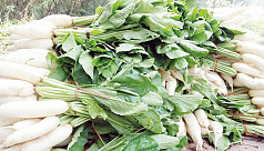 Radish, winter vegetable cultivation...