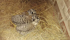 Two babies born to tiger couple famous...