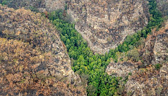 The true impact of the Australian bushfires